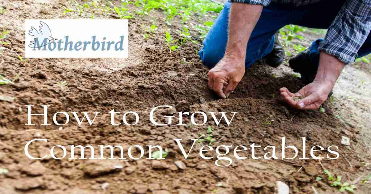 how to grow common vegetables