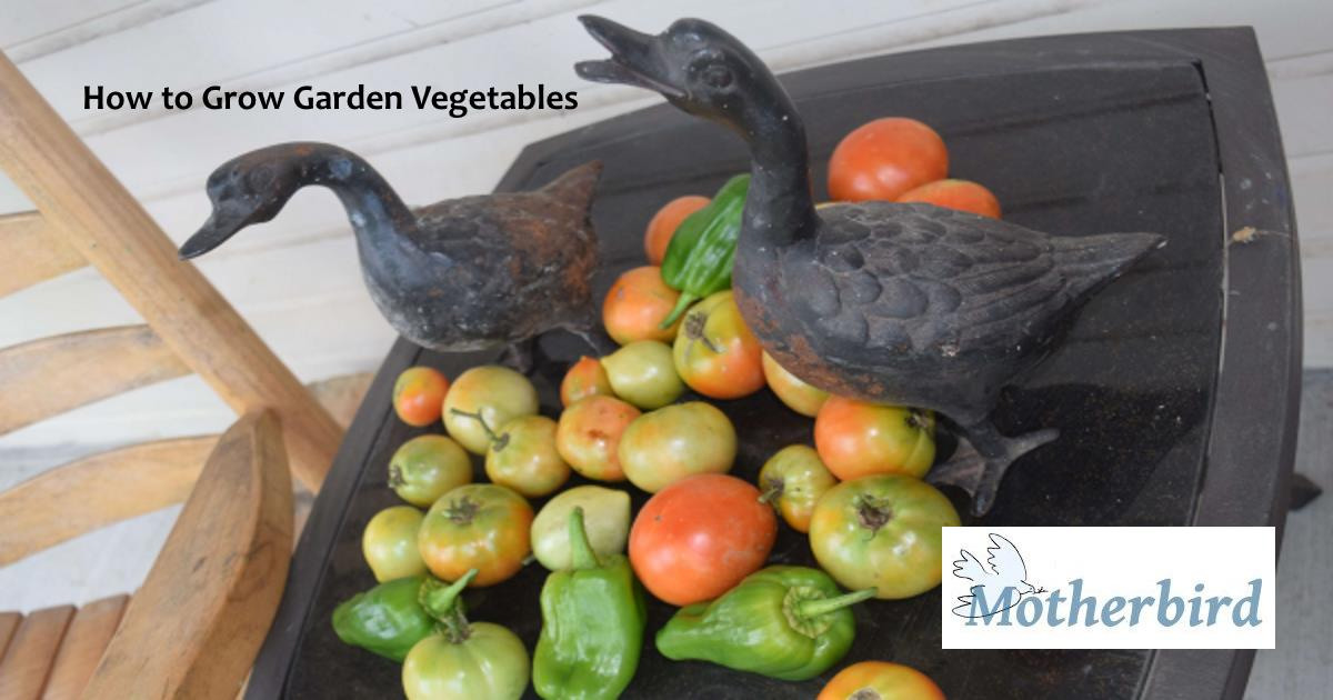 how to grow garden vegetables