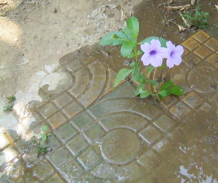 expat flower poem